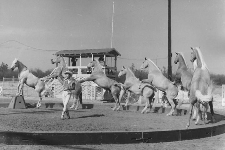 circus-photo