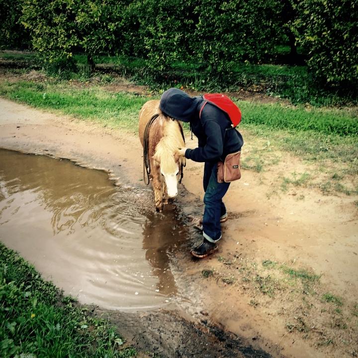 fear free water play clicker training horses