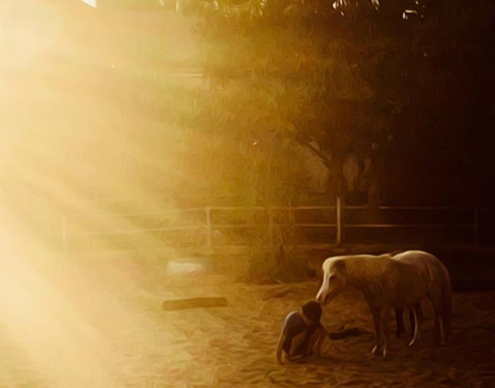 horsefriendship01.jpg